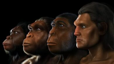 حول فيلم وثائقي عن التطور التاعب